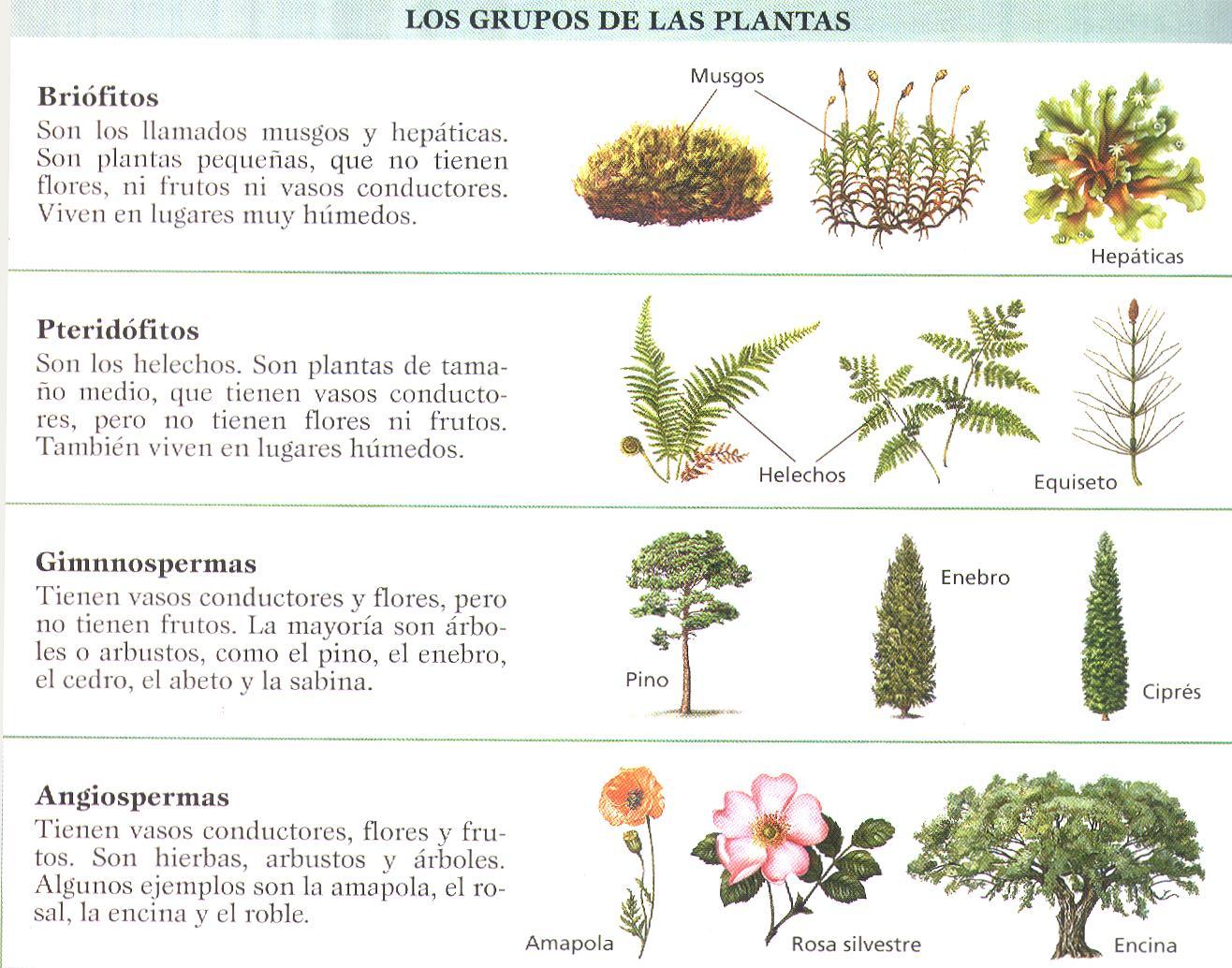 Para realizar una clasificaci n natural de los animales se for Clasificacion de las plantas ornamentales